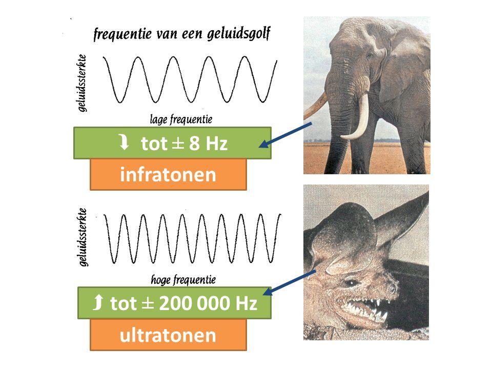 Geluidsterkte 3 Volume = hoeveelheid trillingsenergie = amplitude (uitwijking) van de trilling Eenheid: decibel (dB) Vanaf 90 dB: gevaar voor gehoorschade!