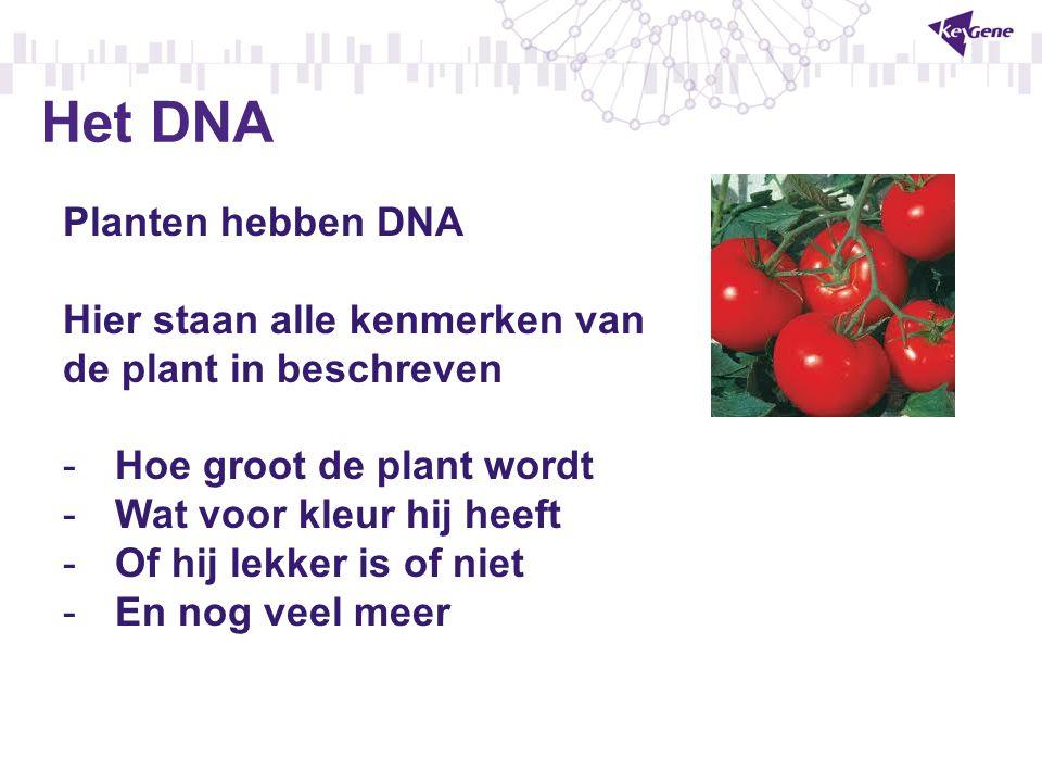 Het DNA Planten hebben DNA Hier staan alle kenmerken van de plant in beschreven -Hoe groot de plant wordt -Wat voor kleur hij heeft -Of hij lekker is