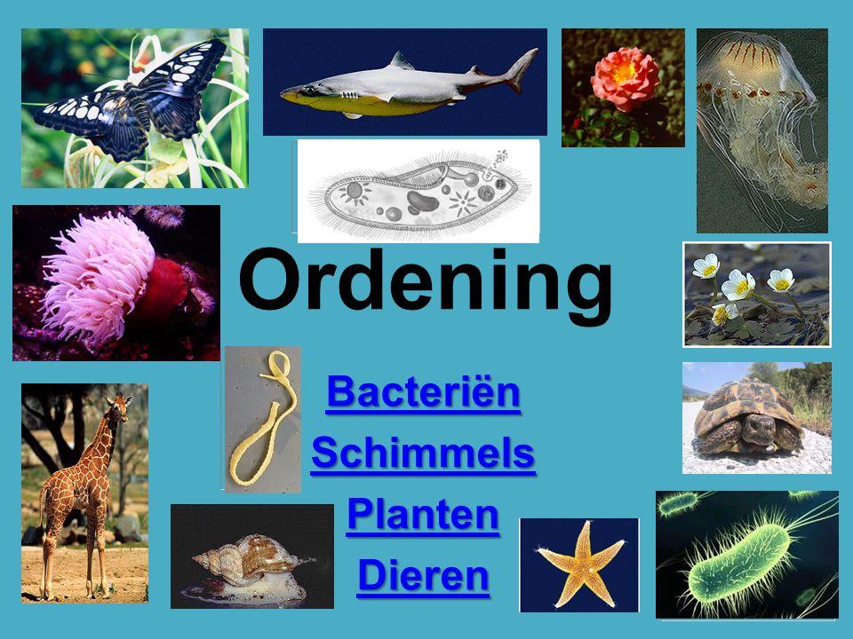 Ordening Bacteriën Schimmels Planten Dieren