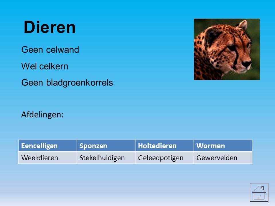 Dieren Geen celwand Wel celkern Geen bladgroenkorrels Afdelingen: EencelligenSponzenHoltedierenWormen WeekdierenStekelhuidigenGeleedpotigenGewervelden