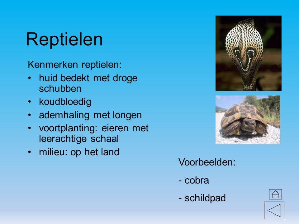Reptielen Kenmerken reptielen: huid bedekt met droge schubben koudbloedig ademhaling met longen voortplanting: eieren met leerachtige schaal milieu: o