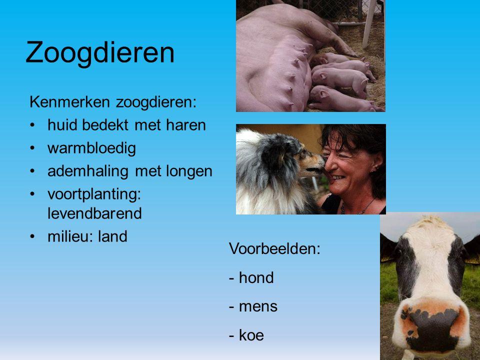 Zoogdieren Kenmerken zoogdieren: huid bedekt met haren warmbloedig ademhaling met longen voortplanting: levendbarend milieu: land Voorbeelden: - hond