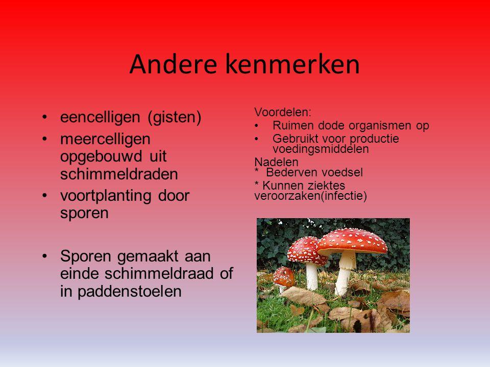 Andere kenmerken eencelligen (gisten) meercelligen opgebouwd uit schimmeldraden voortplanting door sporen Sporen gemaakt aan einde schimmeldraad of in