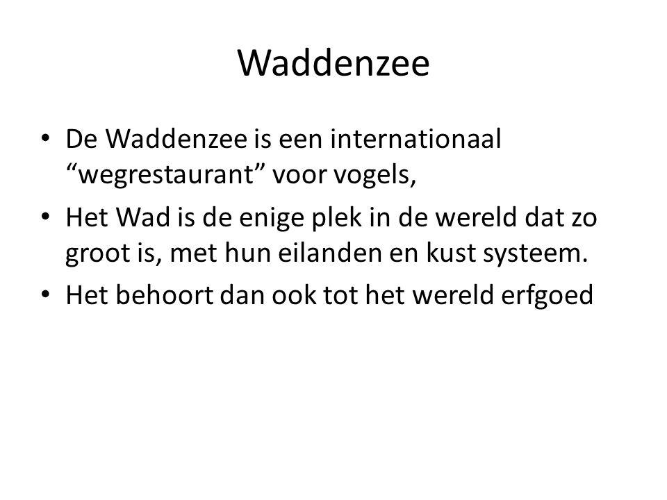 Waddenzee De Waddenzee is een internationaal wegrestaurant voor vogels, Het Wad is de enige plek in de wereld dat zo groot is, met hun eilanden en kust systeem.