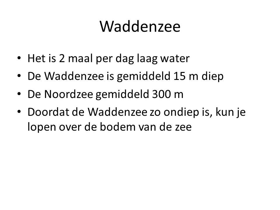 Waddenzee Het is 2 maal per dag laag water De Waddenzee is gemiddeld 15 m diep De Noordzee gemiddeld 300 m Doordat de Waddenzee zo ondiep is, kun je lopen over de bodem van de zee