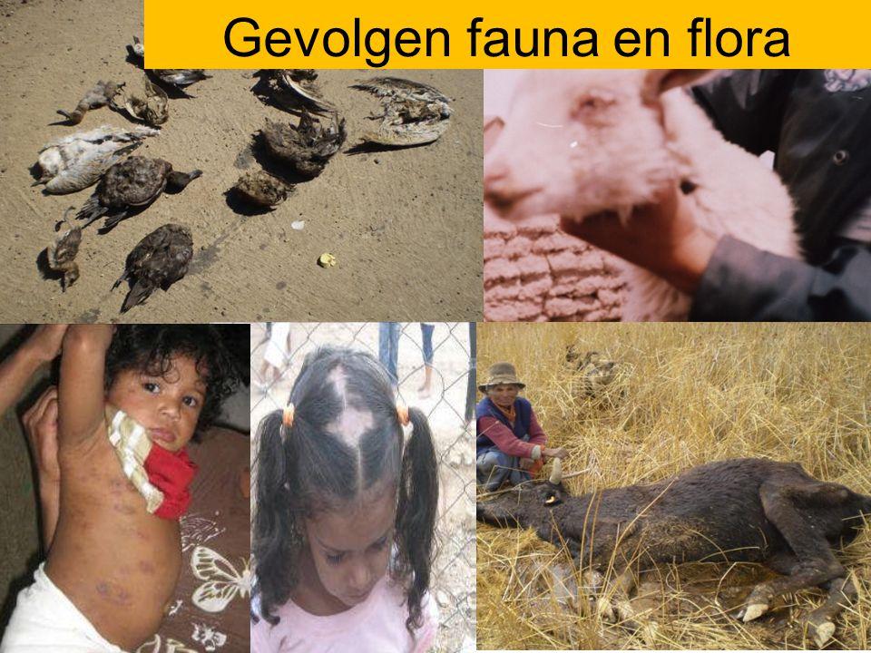 Gevolgen fauna en flora