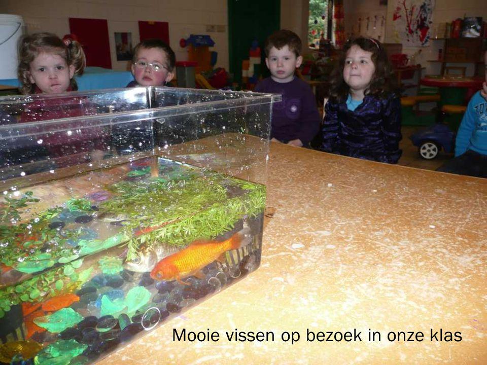 Mooie vissen op bezoek in onze klas