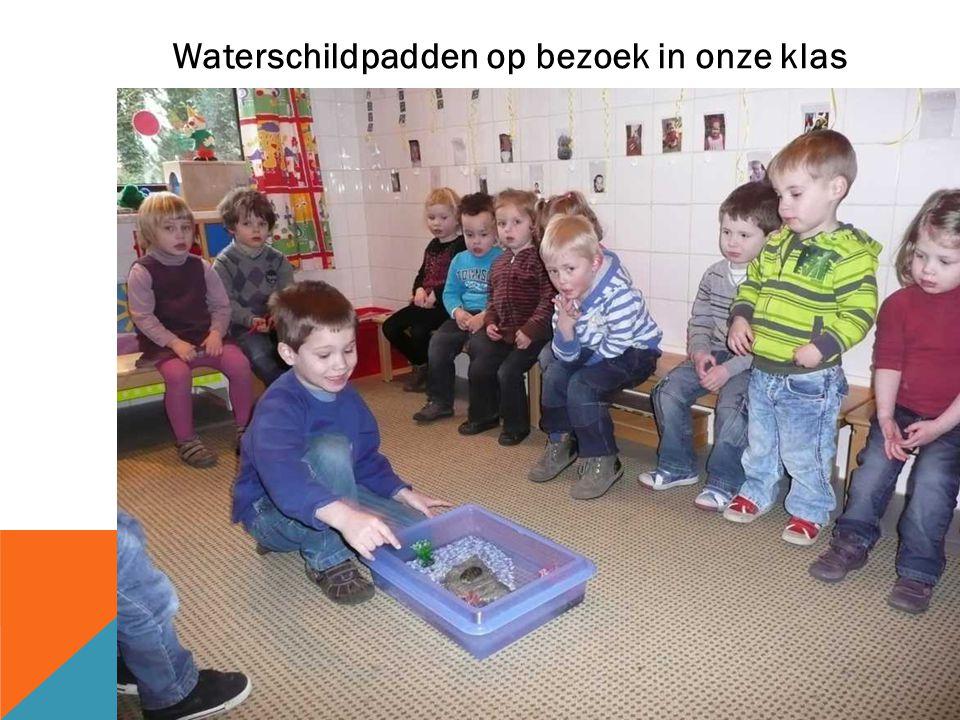 Waterschildpadden op bezoek in onze klas