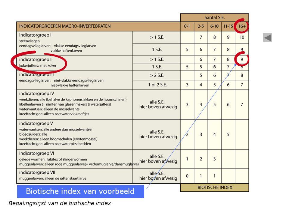 Bepalingslijst van de biotische index Biotische index van voorbeeld
