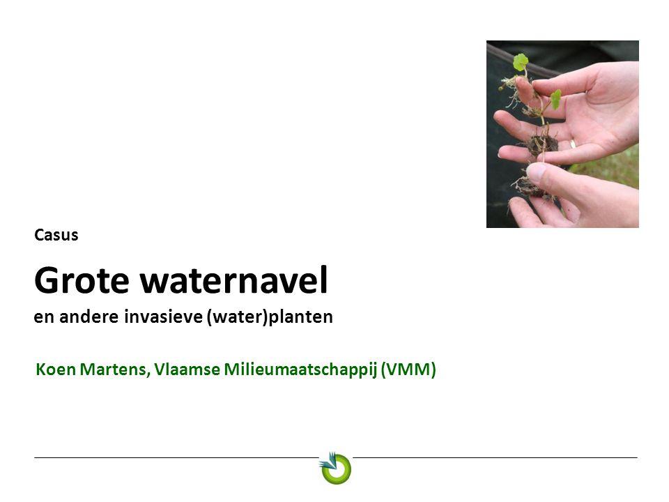 Grote waternavel en andere invasieve (water)planten Casus Koen Martens, Vlaamse Milieumaatschappij (VMM)