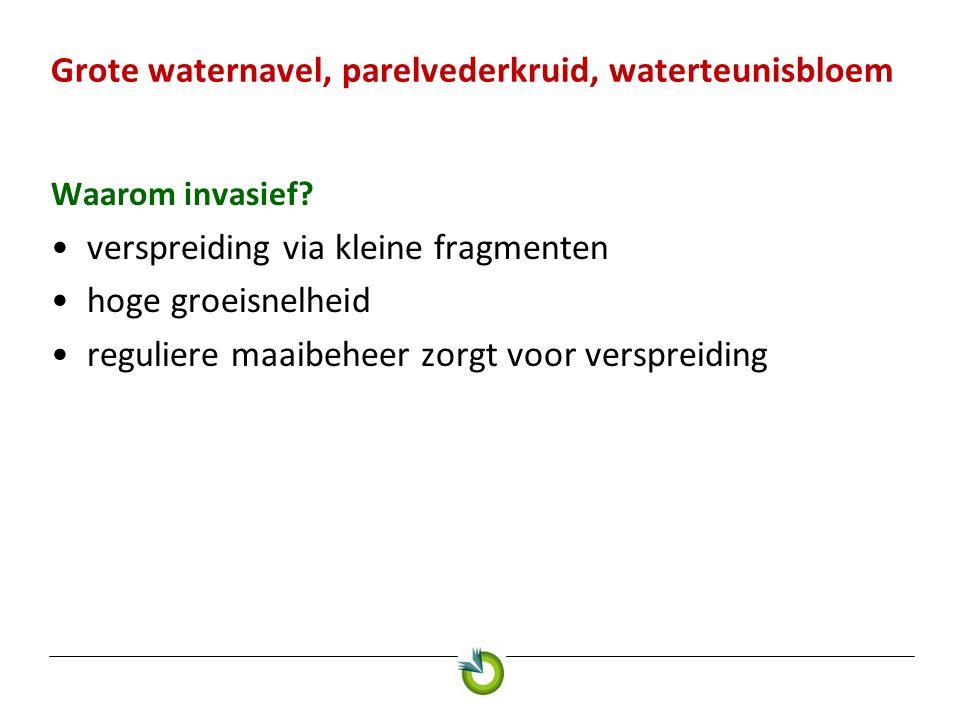 Grote waternavel, parelvederkruid, waterteunisbloem Waarom invasief? verspreiding via kleine fragmenten hoge groeisnelheid reguliere maaibeheer zorgt