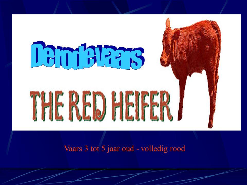 Met dank aan Rico Cortes De originele presentatie is te vinden op: http://www.wisdomintorah.com/powerpoint.htm Nederlandse vertaling S.Van Goethem
