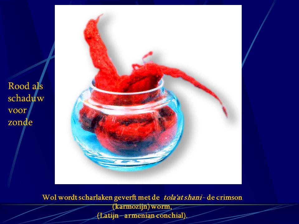 Wol wordt scharlaken geverft met de tola'at shani - de crimson (karmozijn) worm, (Latijn - armenian conchial). Rood als schaduw voor zonde