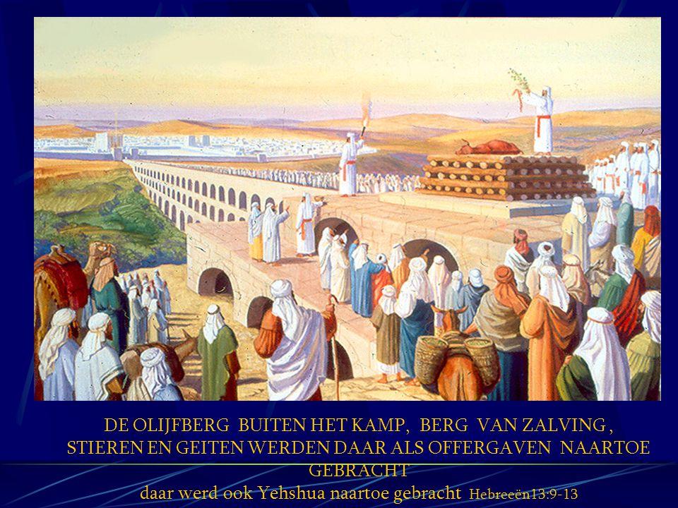 DE OLIJFBERG BUITEN HET KAMP, BERG VAN ZALVING, STIEREN EN GEITEN WERDEN DAAR ALS OFFERGAVEN NAARTOE GEBRACHT daar werd ook Yehshua naartoe gebracht H