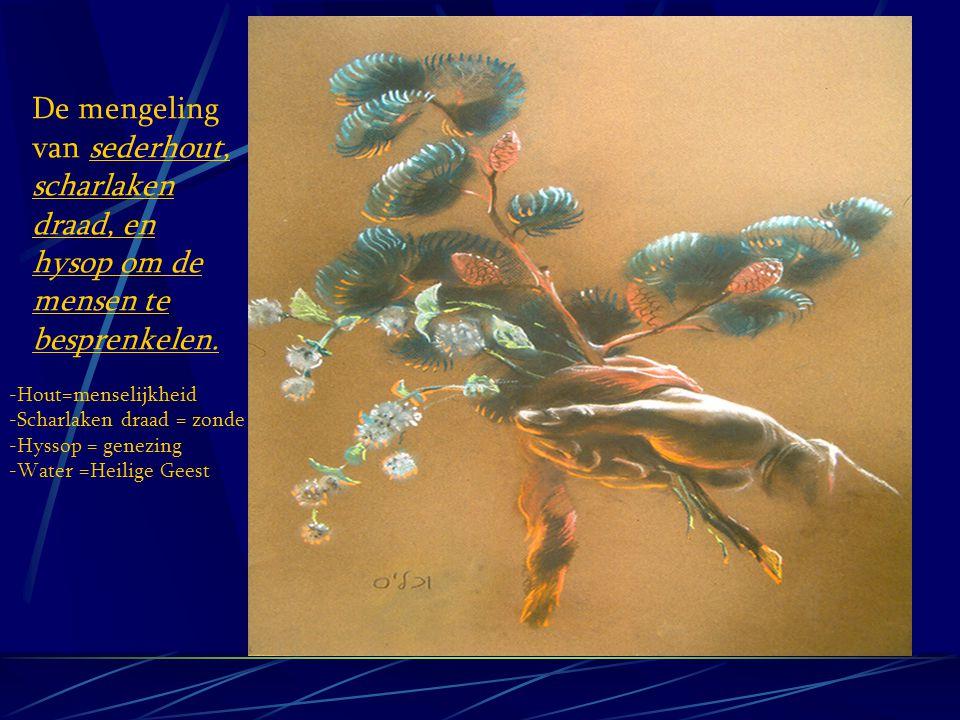 YEHSHUA IN NUMERI 19 ROOD ZONDE VAARS HEIFER ( VROUWELIJK ) ISRAEL SMET ZONDIG JUK DOGMA VAN MENSEN ELEAZER HULP VAN YHVH BUITEN HET KAMP OLIJFBERG 7 KEER PERFECT PLAN VAN YHVH HOUT MENSELIJKHEID HYSSOP GENEZENDE EIGENSCHAPPEN SCHARLAKEN ROOD/ZONDE TOT ZELFS YEHSHUA BEGRAVEN BIJ ZONSONDERGANG MAN DIE REIN IS NICODEMUS, JOSEPH OF ARIMATHEA REINE PLAATS YEHSHUA BEGRAVEN IN EEN NIEUW GRAF