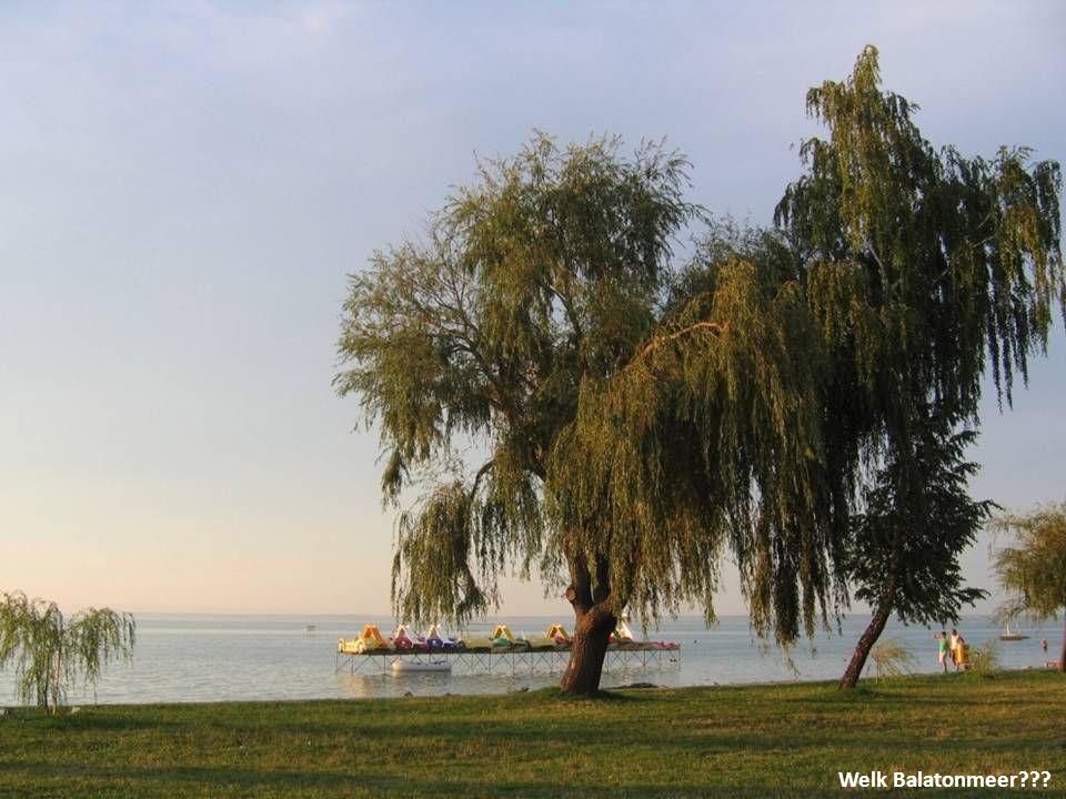 Om een compleet beeld te krijgen moet men beslist ook de smaken van het Balatonmeer proeven: bijvoorbeeld vissoep of snoekbaars, de lekkerste vis uit het meer...