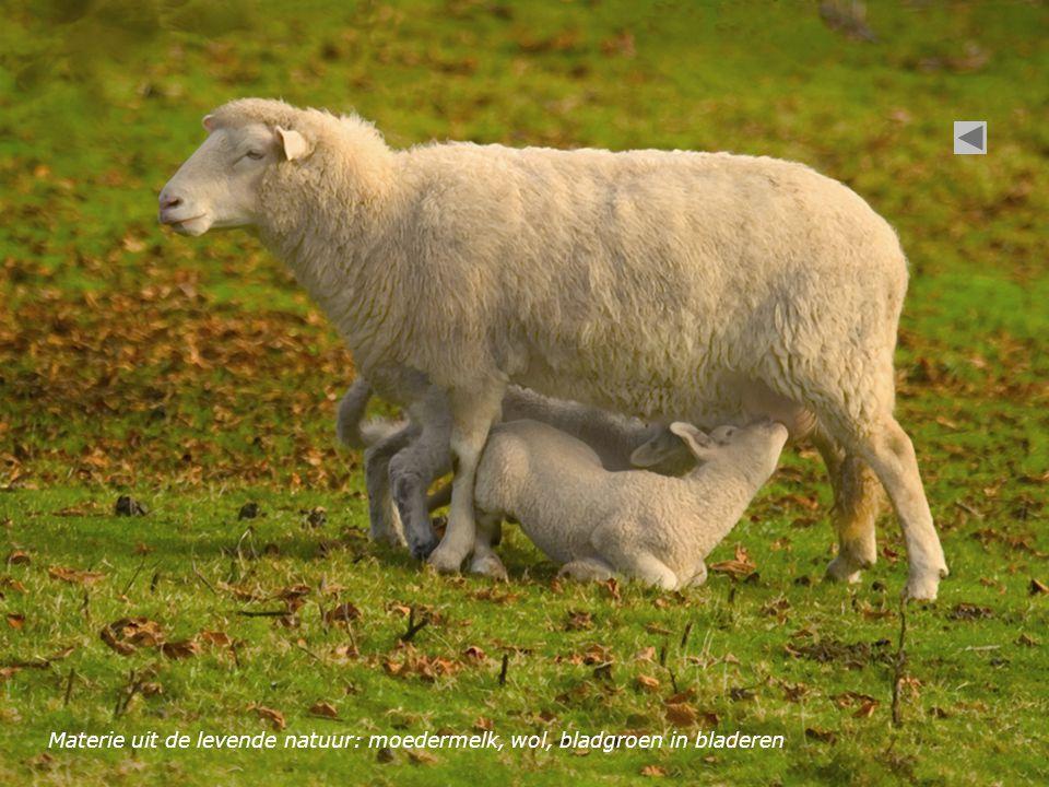 Materie uit de levende natuur: moedermelk, wol, bladgroen in bladeren