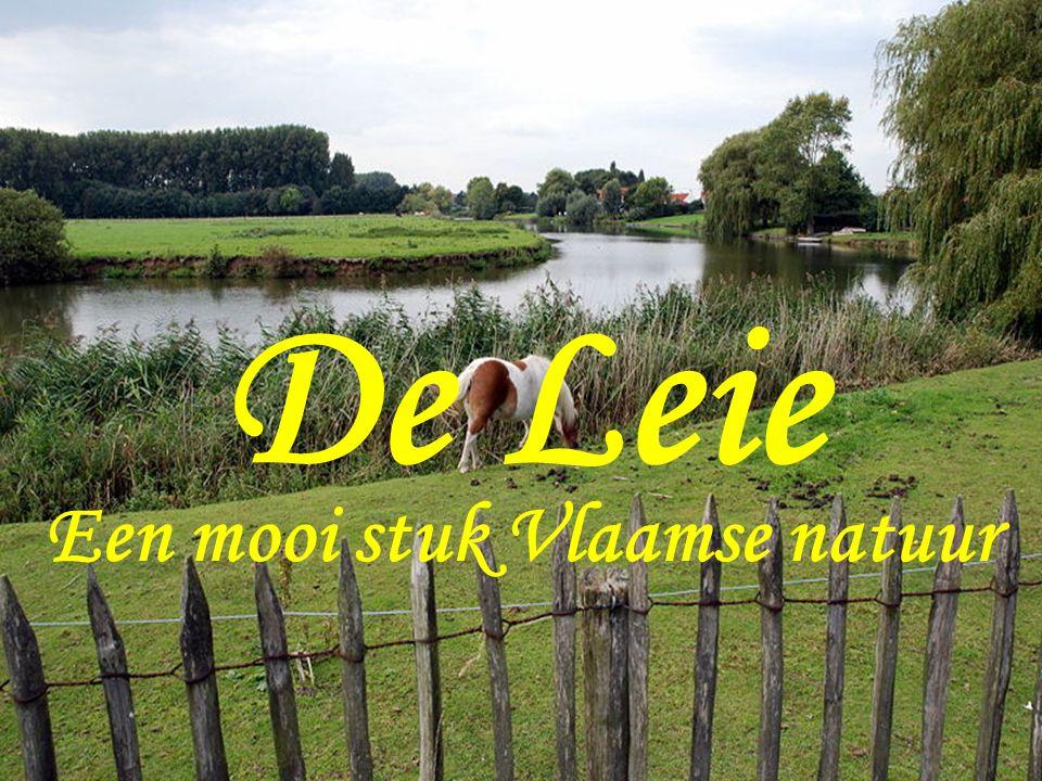 De Leie Een mooi stuk Vlaamse natuur