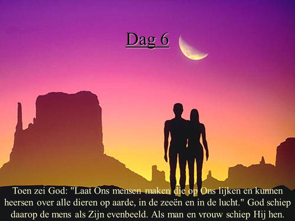 Dag 6 Toen zei God: