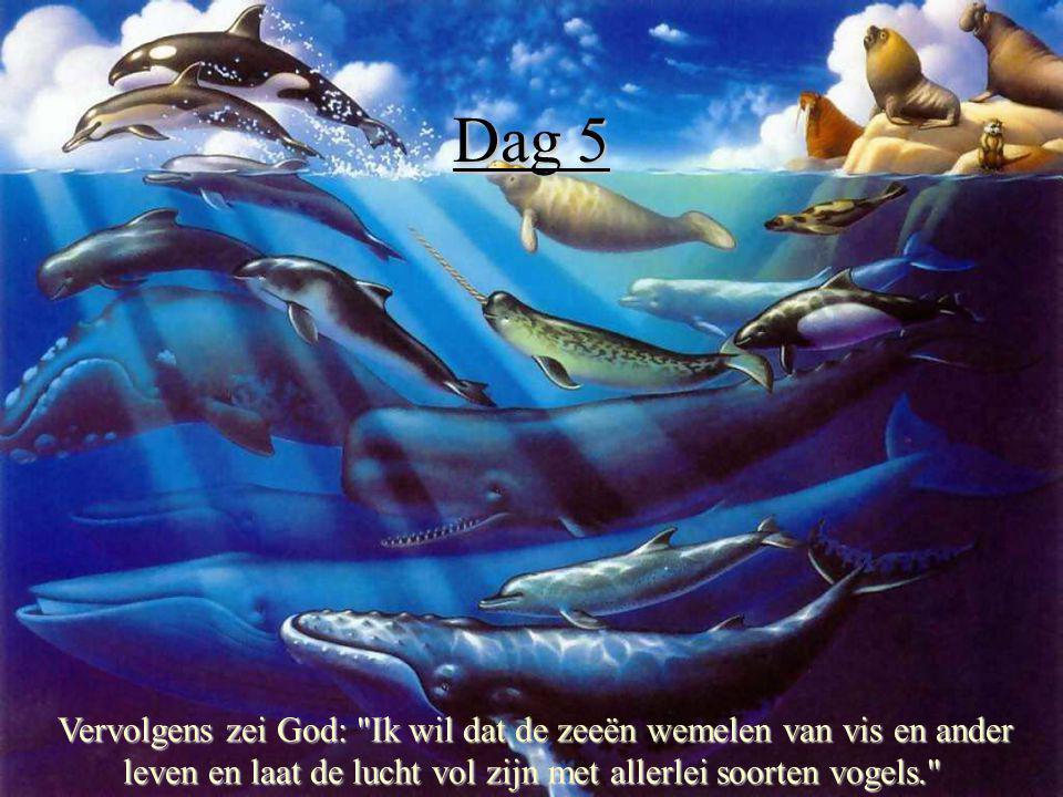 Dag 5 Zo maakte God de grote zeedieren, allerlei vissen en vogels, elk naar hun eigen aard.