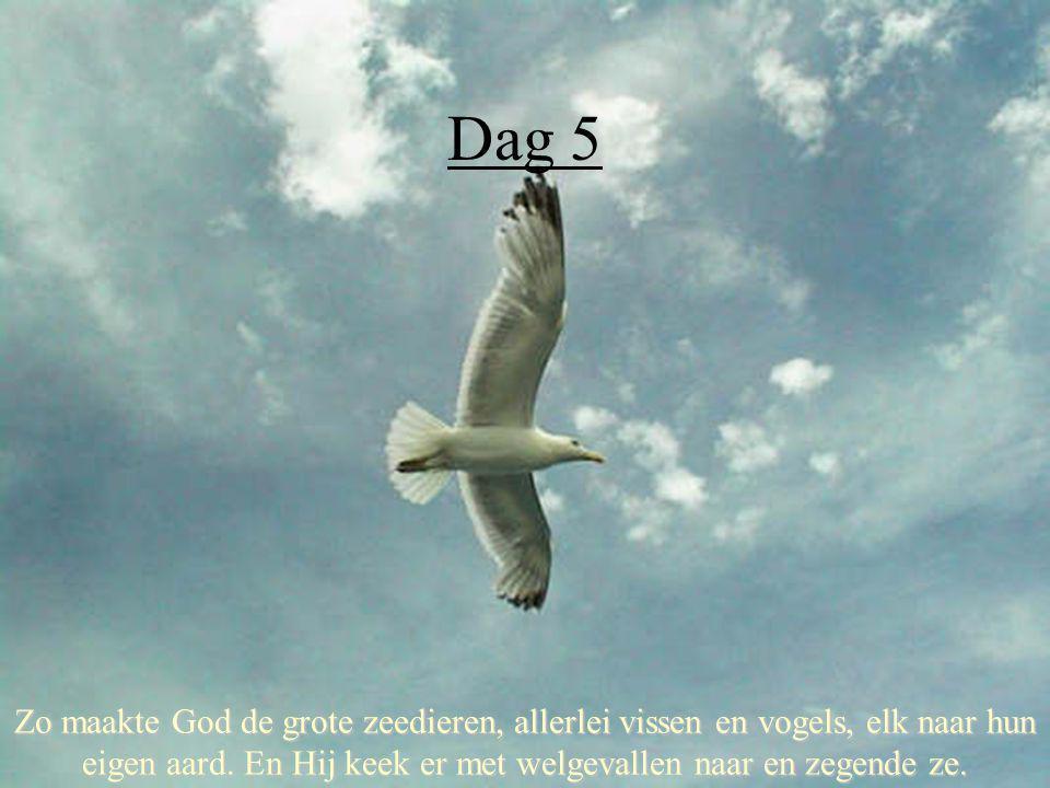 Dag 5 Zo maakte God de grote zeedieren, allerlei vissen en vogels, elk naar hun eigen aard. En Hij keek er met welgevallen naar en zegende ze.