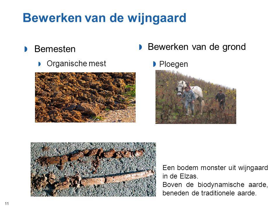 Bewerken van de wijngaard  Bemesten  Organische mest 11  Bewerken van de grond  Ploegen Een bodem monster uit wijngaard in de Elzas. Boven de biod