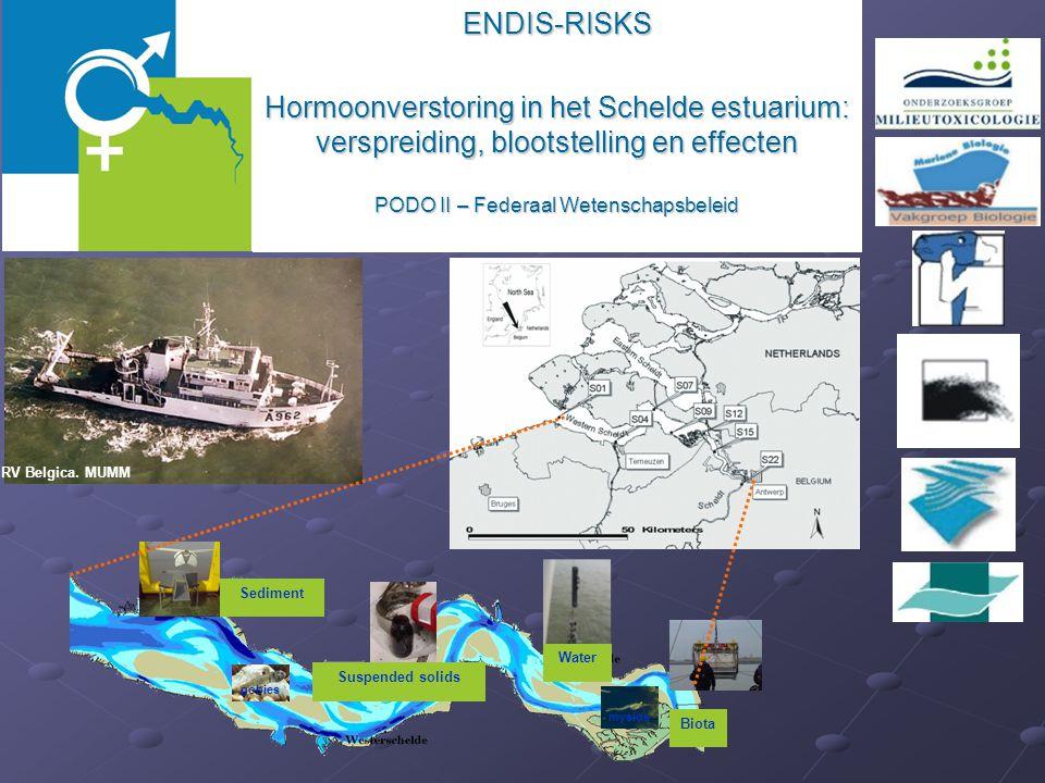 ENDIS-RISKS Hormoonverstoring in het Schelde estuarium: verspreiding, blootstelling en effecten PODO II – Federaal Wetenschapsbeleid RV Belgica. MUMM