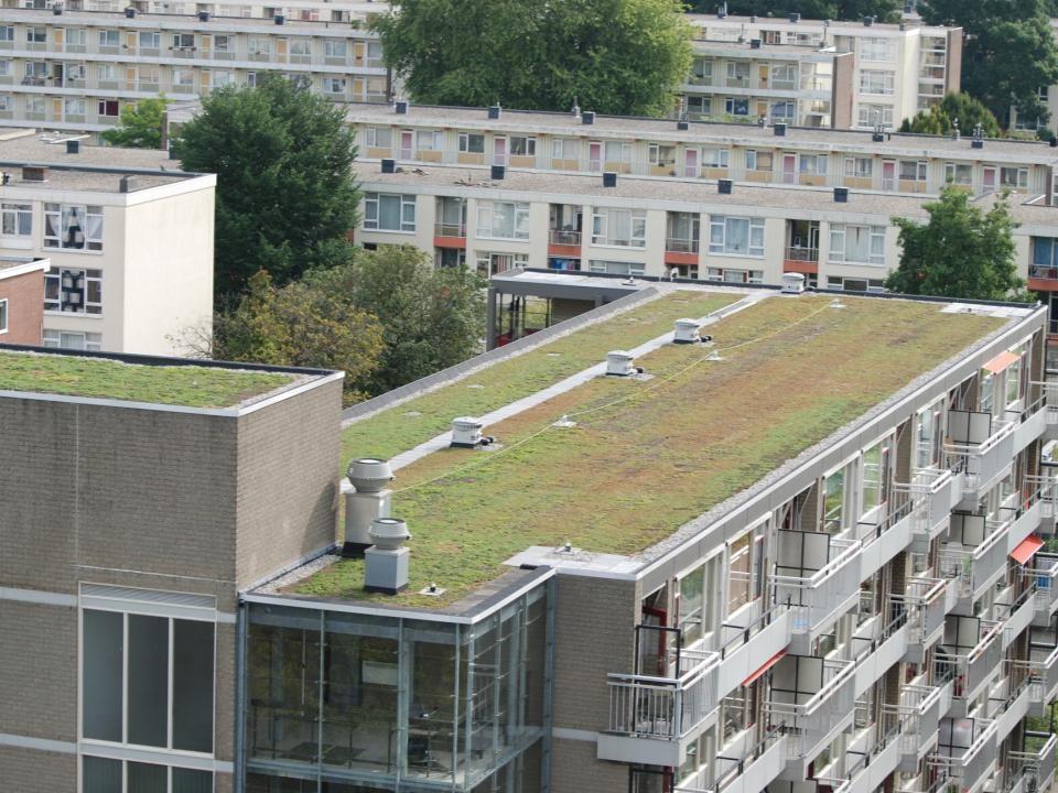 Korpersteijn aan de Middelharnishof heeft onlangs voor de isolatie, een dak met natuurlijke producten gekregen