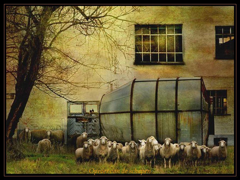 Oproer van de schapen