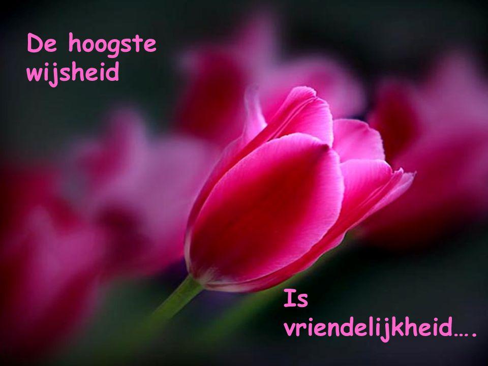 De hoogste wijsheid Is vriendelijkheid….