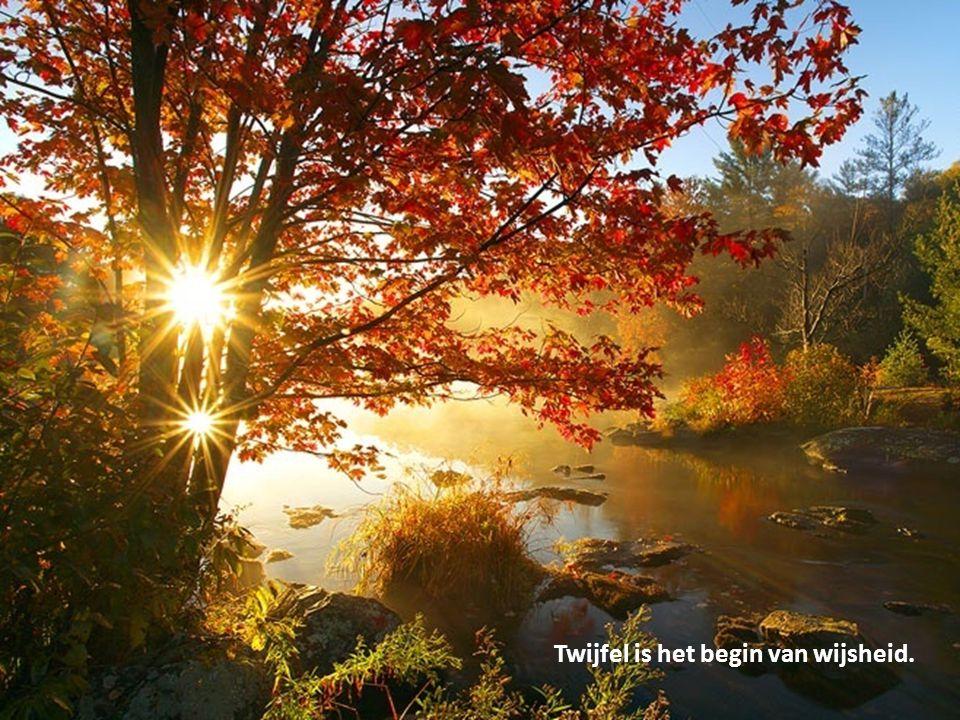 Paul de Groot. Fijne feestdagen en een gezond 2013!
