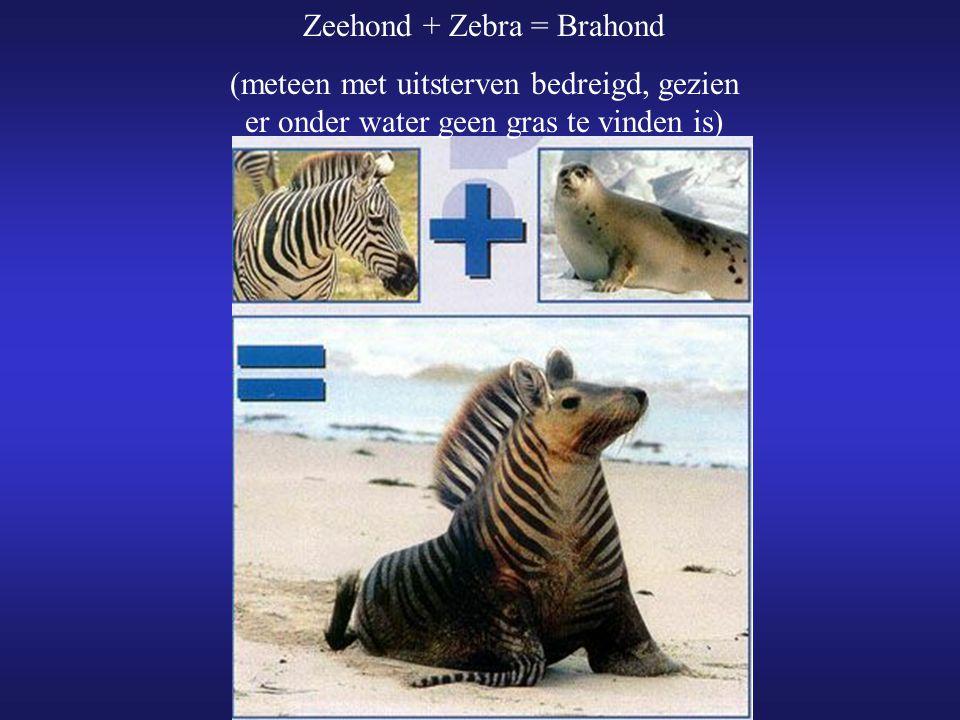 Zeehond + Zebra = Brahond (meteen met uitsterven bedreigd, gezien er onder water geen gras te vinden is)