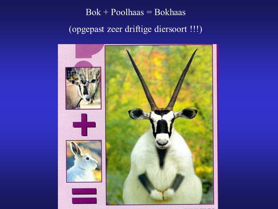 Bok + Poolhaas = Bokhaas (opgepast zeer driftige diersoort !!!)
