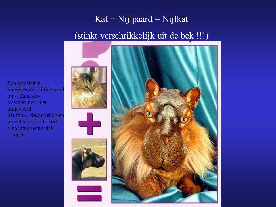 Kat + Nijlpaard = Nijlkat (stinkt verschrikkelijk uit de bek !!!) Een kruising in omgekeerde richting werd uit veiligheids- overweginen, niet uitgevoerd, het zou U slecht bekomen mocht het nijlkatpaard, s'nachts over uw dak kruipen….