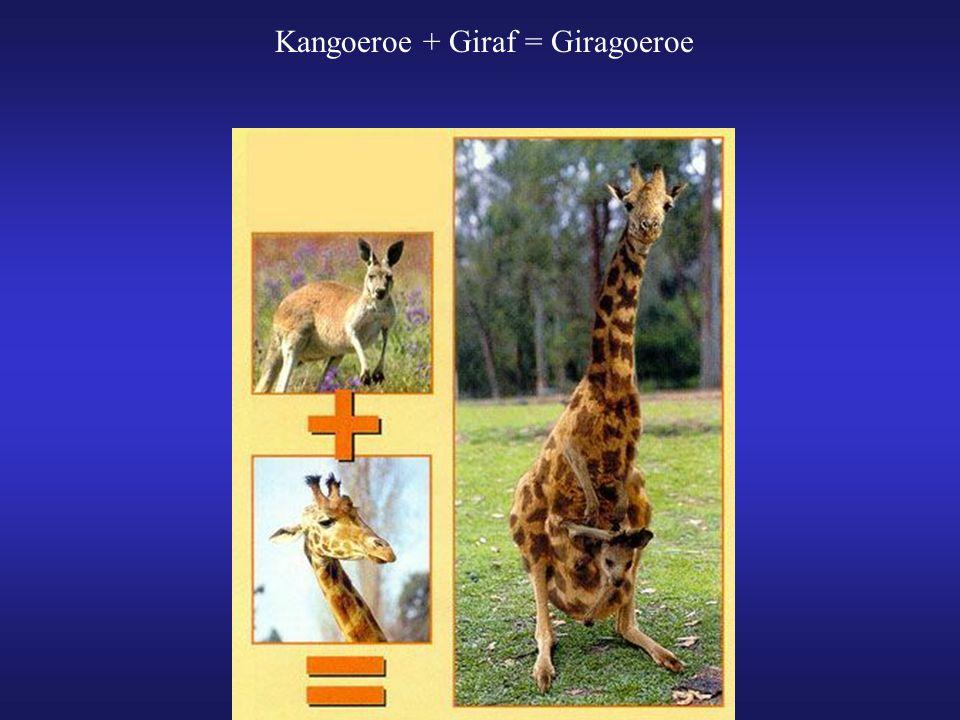 Kangoeroe + Giraf = Giragoeroe