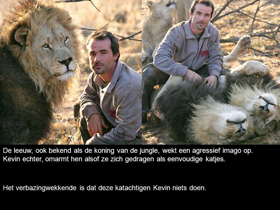 De leeuw, ook bekend als de koning van de jungle, wekt een agressief imago op.