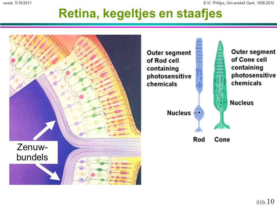 © W. Philips, Universiteit Gent, 1998-2012versie: 5/10/2011 01b. 10 Retina, kegeltjes en staafjes Zenuw- bundels