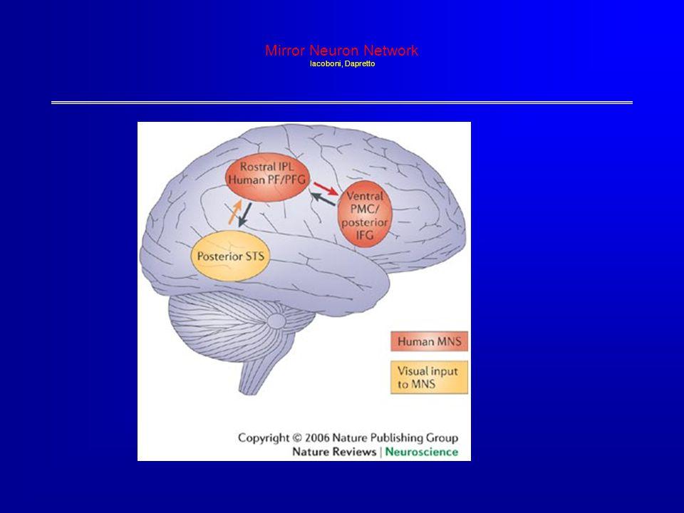 Mirror Neuron Network Iacoboni, Dapretto