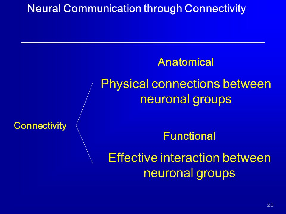 20 Neural Communication through Connectivity Connectivity Anatomical Physical connections between neuronal groups Functional Effective interaction bet