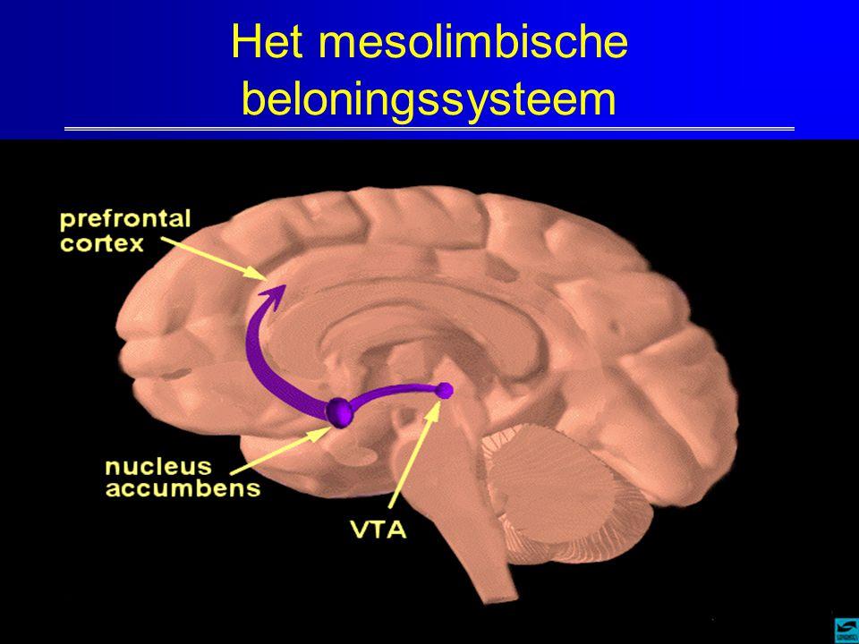 Het mesolimbische beloningssysteem