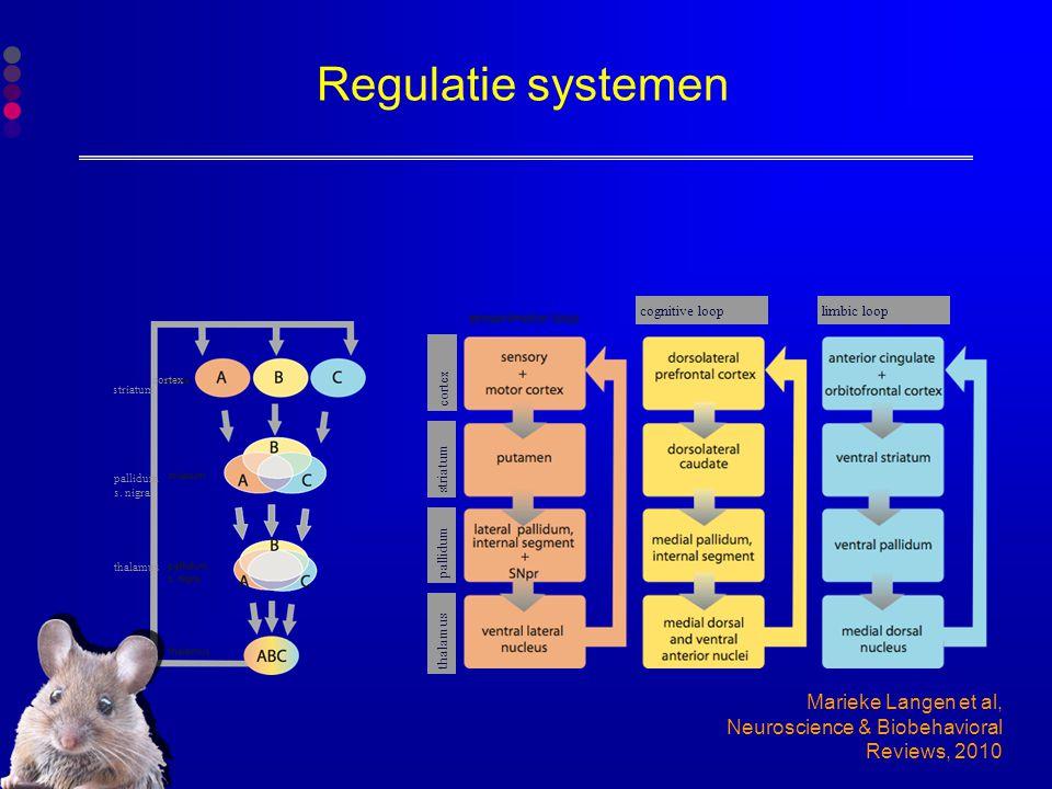 Regulatie systemen Marieke Langen et al, Neuroscience & Biobehavioral Reviews, 2010 cortex cognitive looplimbic loop thalamus pallidum striatum cortex