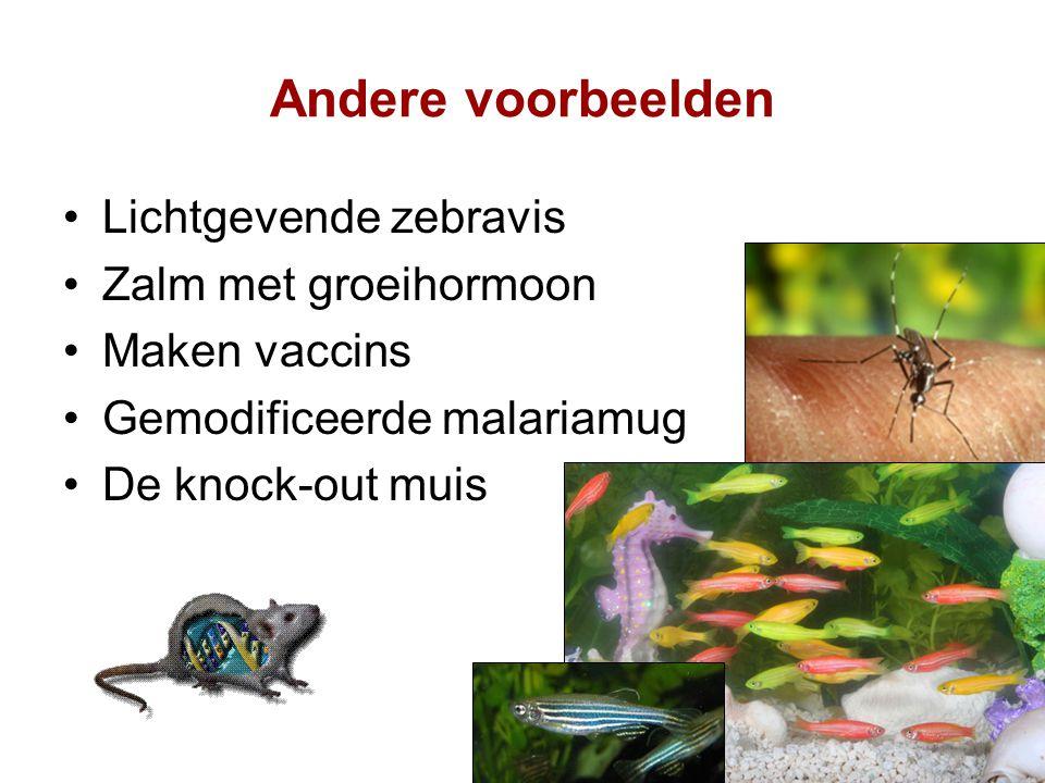 Andere voorbeelden Lichtgevende zebravis Zalm met groeihormoon Maken vaccins Gemodificeerde malariamug De knock-out muis