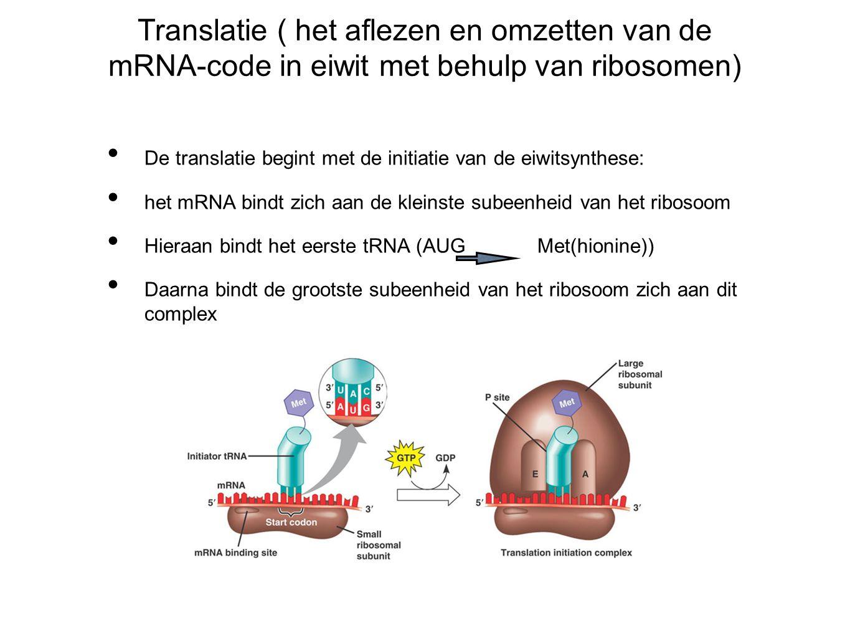 Translatie ( het aflezen en omzetten van de mRNA-code in eiwit met behulp van ribosomen) De translatie begint met de initiatie van de eiwitsynthese: het mRNA bindt zich aan de kleinste subeenheid van het ribosoom Hieraan bindt het eerste tRNA (AUG Met(hionine)) Daarna bindt de grootste subeenheid van het ribosoom zich aan dit complex