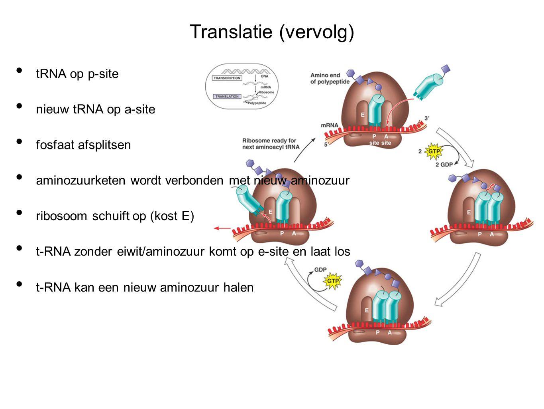 Translatie (vervolg) tRNA op p-site nieuw tRNA op a-site fosfaat afsplitsen aminozuurketen wordt verbonden met nieuw aminozuur ribosoom schuift op (kost E) t-RNA zonder eiwit/aminozuur komt op e-site en laat los t-RNA kan een nieuw aminozuur halen