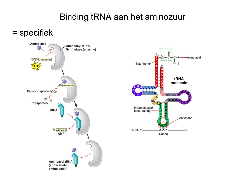 Binding tRNA aan het aminozuur = specifiek