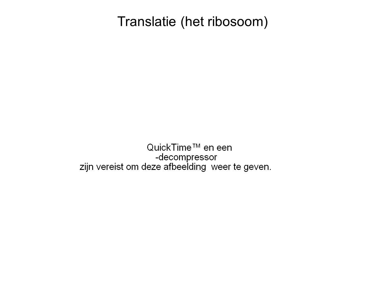 Translatie (het ribosoom)