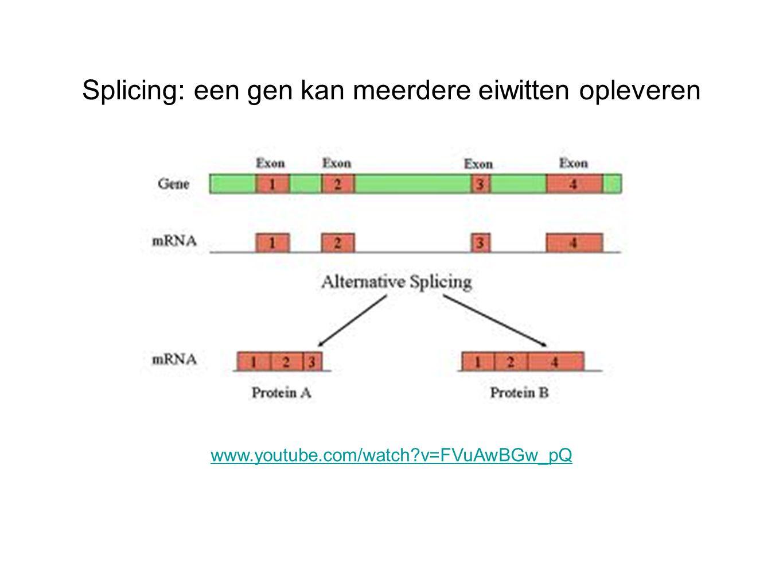 Splicing: een gen kan meerdere eiwitten opleveren www.youtube.com/watch?v=FVuAwBGw_pQ