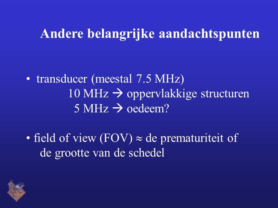 Andere belangrijke aandachtspunten transducer (meestal 7.5 MHz) 10 MHz  oppervlakkige structuren 5 MHz  oedeem? field of view (FOV)  de prematurite