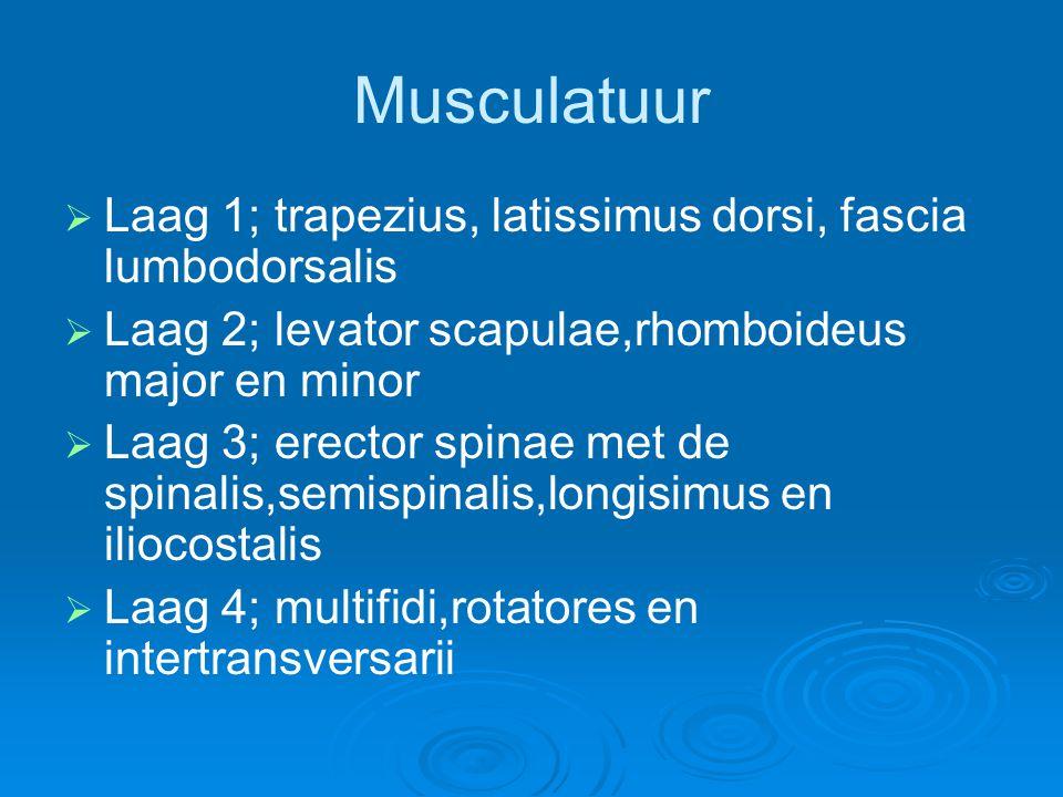 Musculatuur   Laag 1; trapezius, latissimus dorsi, fascia lumbodorsalis   Laag 2; levator scapulae,rhomboideus major en minor   Laag 3; erector
