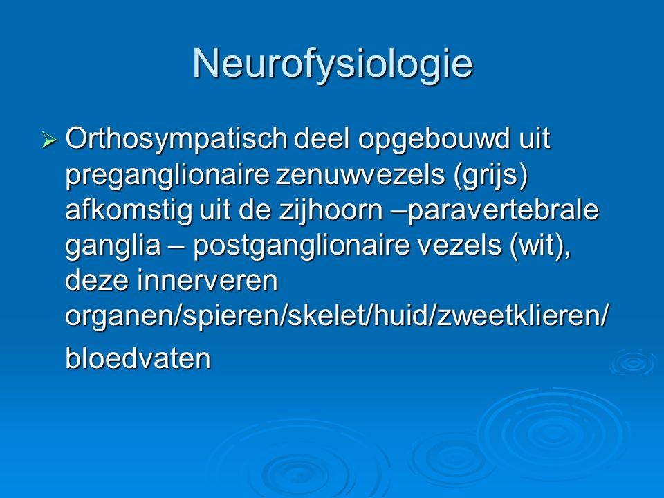 Neurofysiologie  Orthosympatisch deel opgebouwd uit preganglionaire zenuwvezels (grijs) afkomstig uit de zijhoorn –paravertebrale ganglia – postgangl